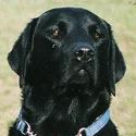 Hund Buster vom Sauerbrunnberg