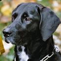 Hund Cora