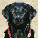 Hund Penelope vom Sauerbrunnberg